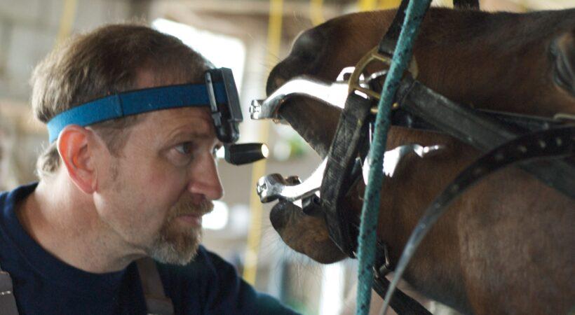 dentistry for horses
